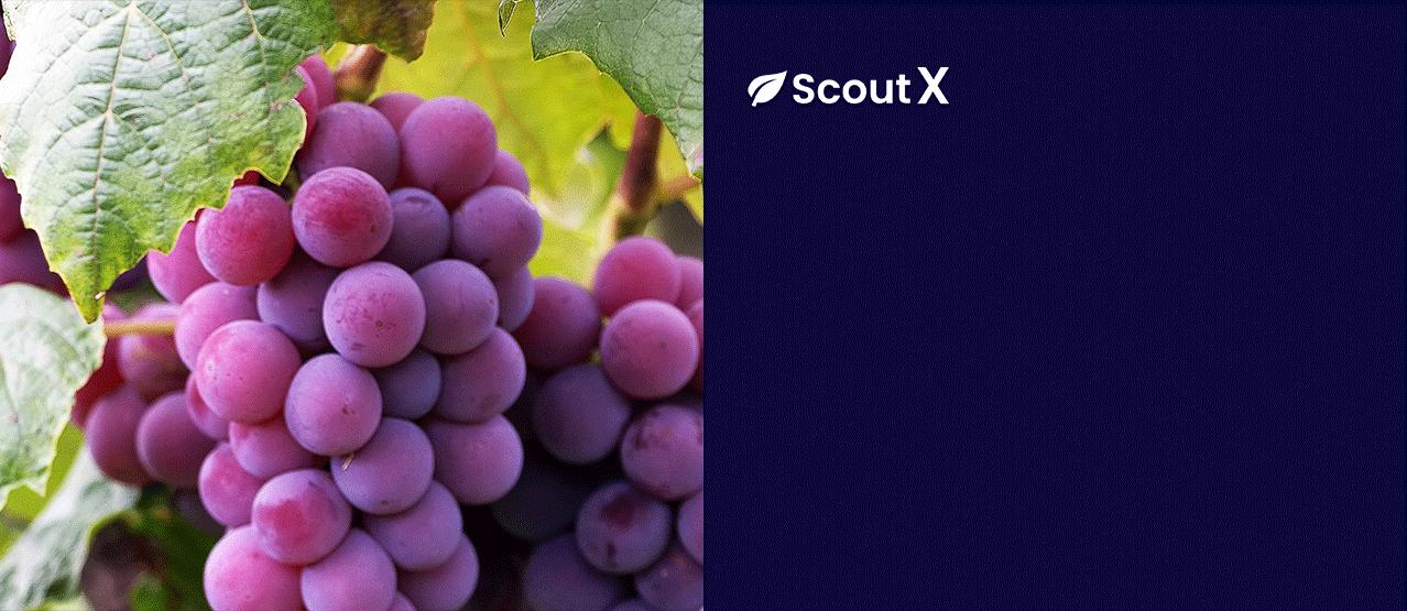 scoutx--slider-image